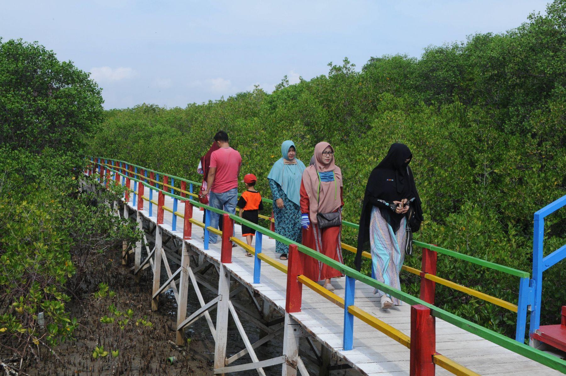 Sumut Dorong Pemanfaatan Hutan Mangrove Jadi Obyek Wisata