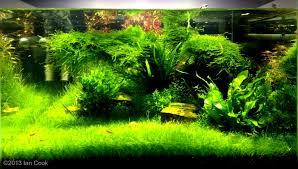 showcase.aquatic-gardeners.org