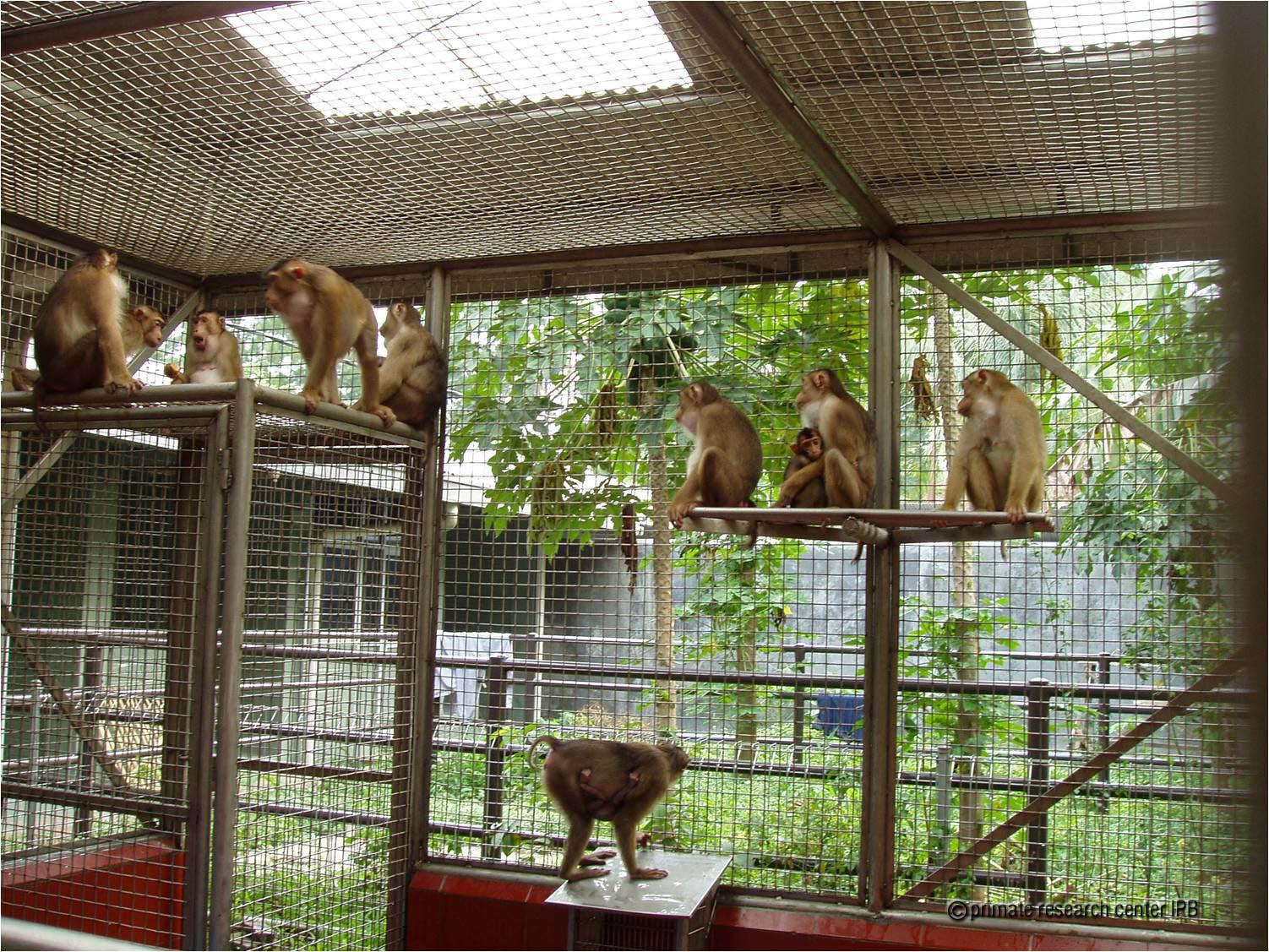Pusat Studi Satwa Primata IPB University