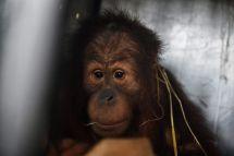 AFP/Lillian Suwanrumpha