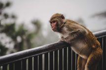 Unsplash/ Vedant Choudhary