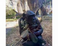 Instagram San Diego Zoo