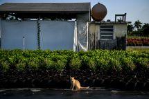 AFP/CHANDAN KHANNA