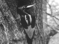 AFP/Arthur ALLEN / Cornell Lab of Ornithology