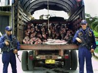 AFP/Armada Nacional.