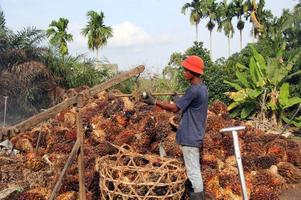 Indonesia dan Malaysia Perkuat Kebijakan Pengembangan Kelapa Sawit