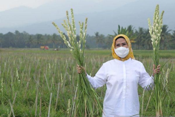ANTARA/Lukman Hakim