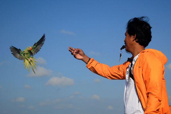 ANTARA/Saiful Bahri