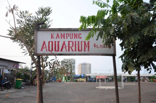 PDIP: Ironis, Anies Bangun Kampung Akuarium tapi Tabrak Aturan