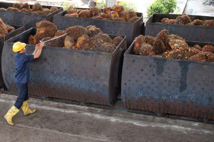 Pemerintah Berencana Sesuaikan Tarif Pungutan Ekspor CPO