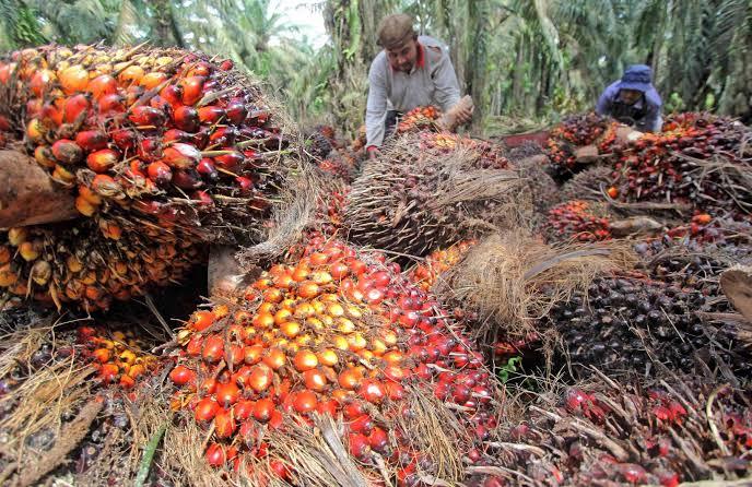 Industri Sawit Buka Lapangan Kerja bagi 6,2 Juta Petani